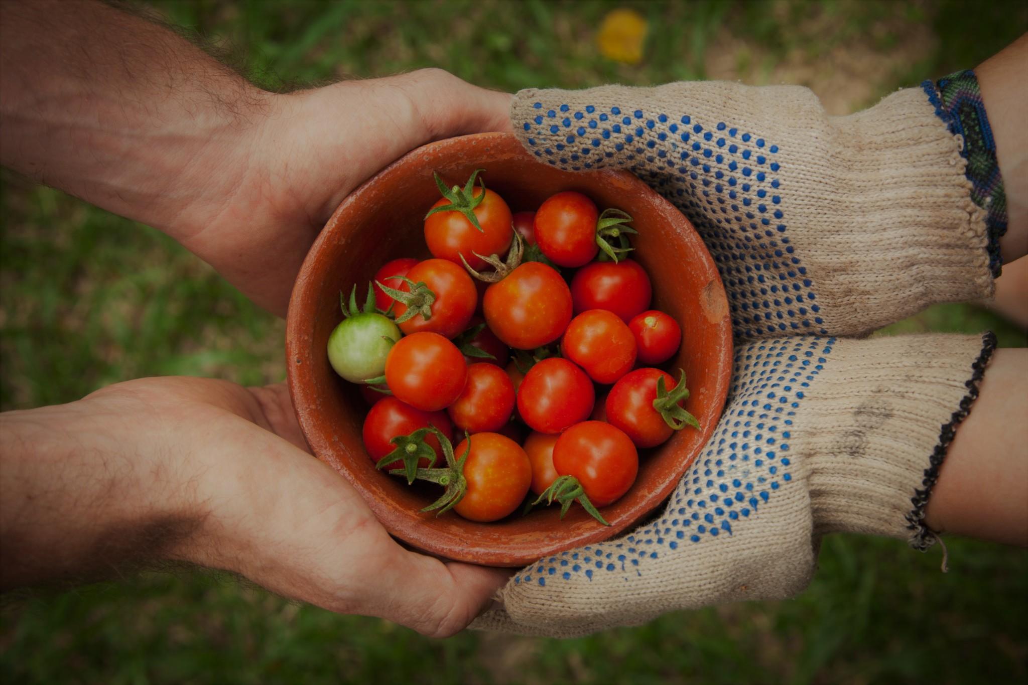Un partenaire tend la main à un agriculteur